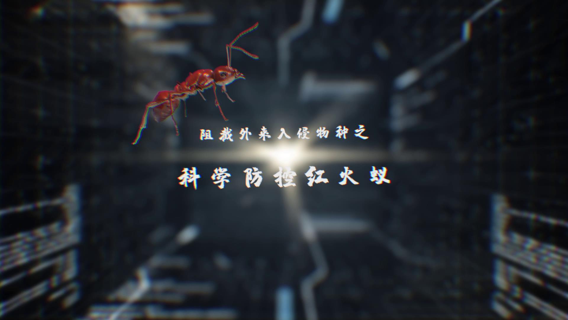 阻截外来入侵物种之科学防控红火蚁